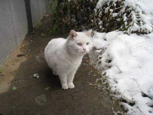 猫咪冬天会冷吗应该怎么保暖?