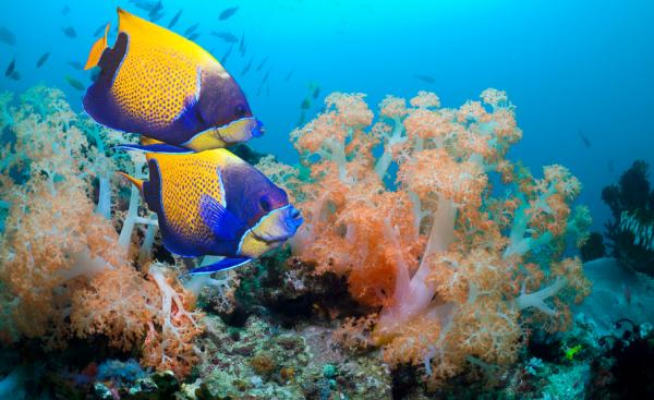 小型热带鱼混养搭配